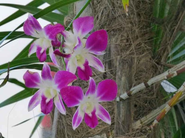 b Orchids