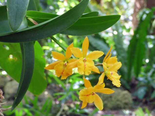 b Small Yellow Orchids