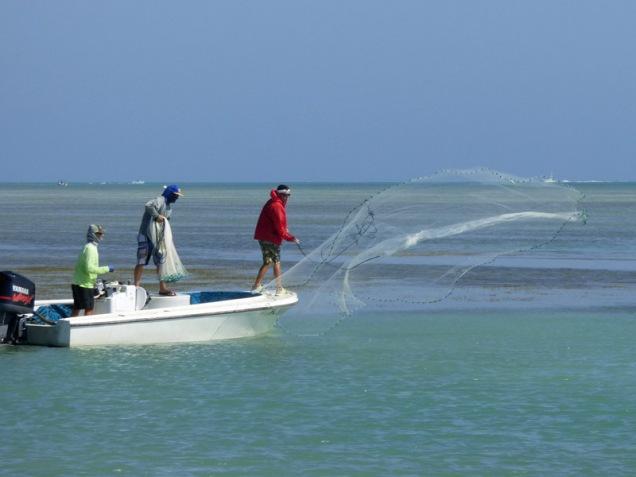 b Catching Bait Fish