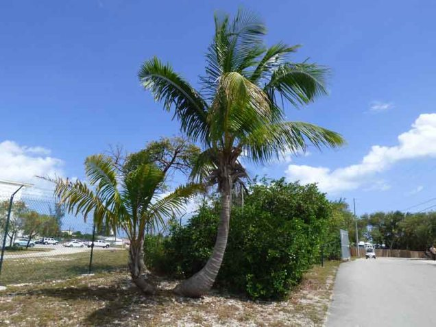 b J Palm