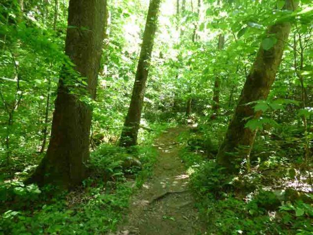 b Baxter Creek Trail 2