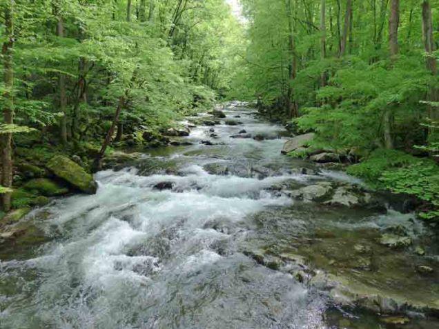 b Big Creek Upstream