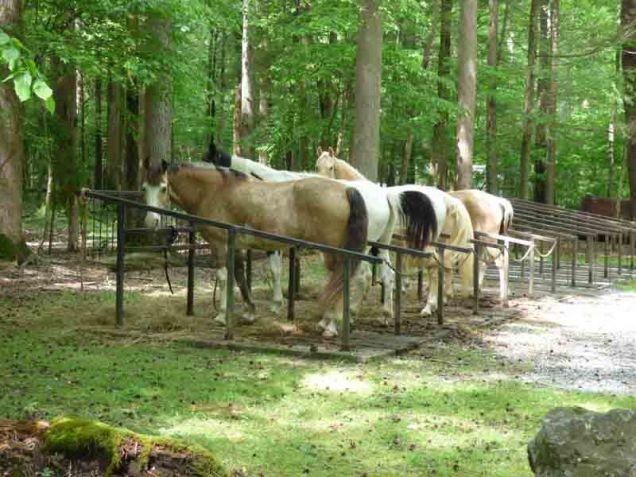 b Horses in Horse Camp