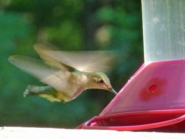 b Hummingbird 2