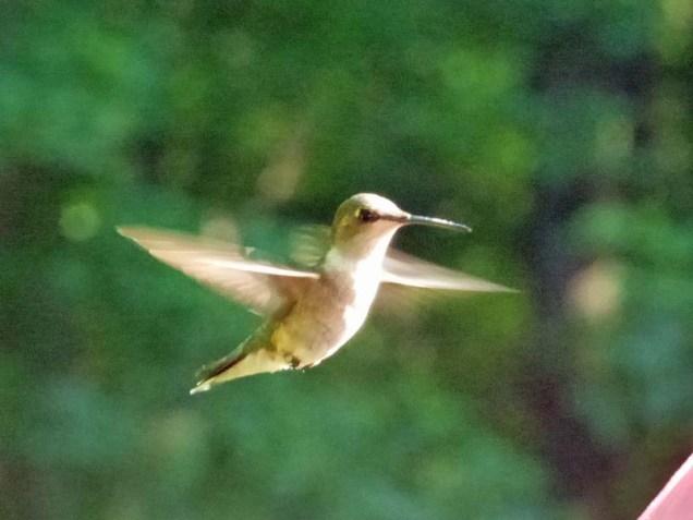 b Hummingbird 3
