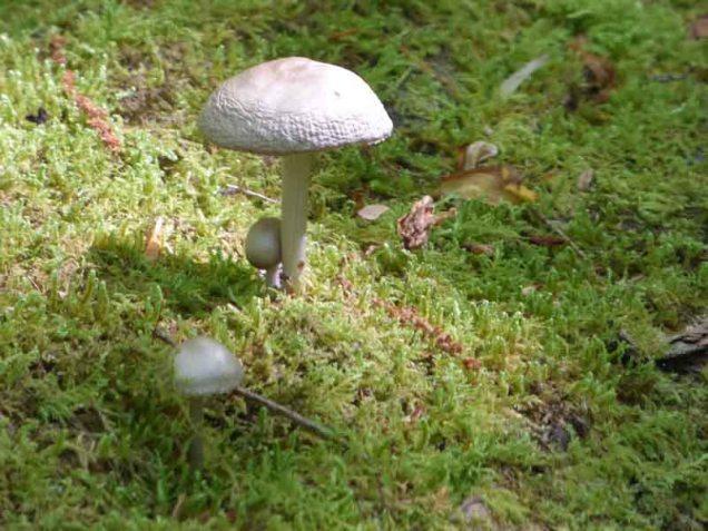 b Mushrooms on Mossy Log