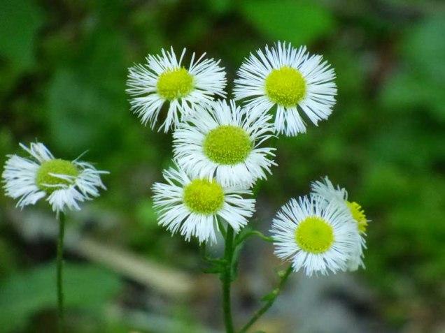 b Tiny Daisy Like Flowers