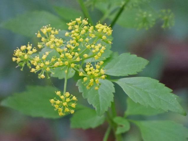 b Tiny Yellow Flowers