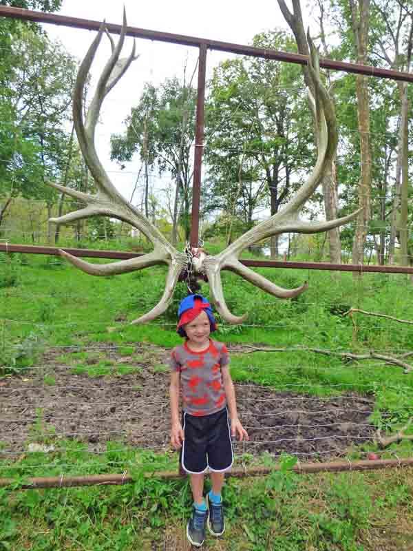 b16 Owen with Elk Antlers