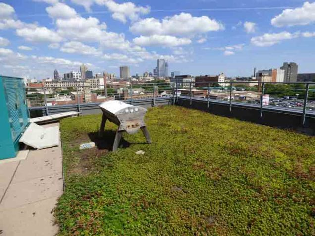 b5 Rooftop Beehive