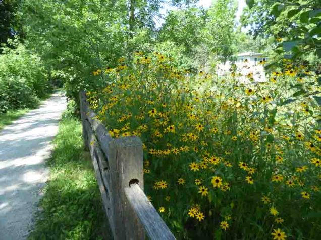 b94 Fence and Flowers Along Trail