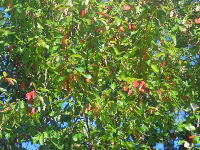 b01-a-hint-of-fall-red-leaves