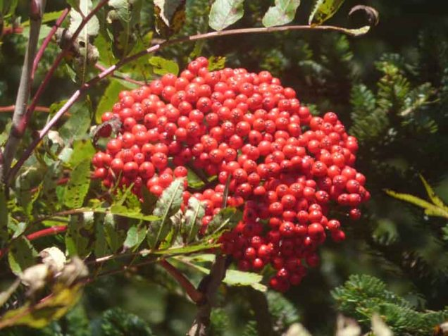 b08-closeup-of-berries