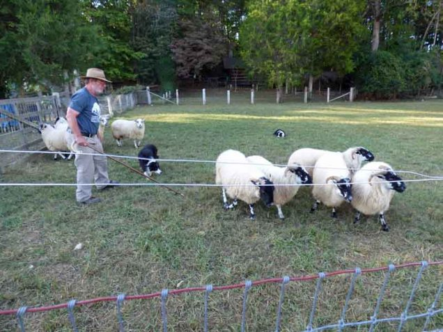 b23-sheepherding-demonstration