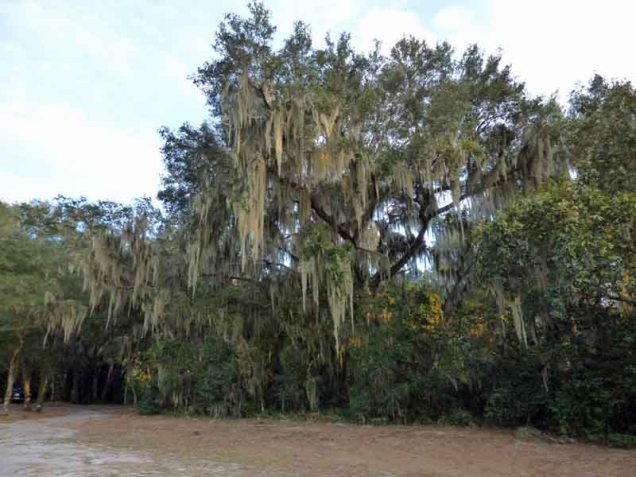 b4-spanish-moss-hanging-on-trees