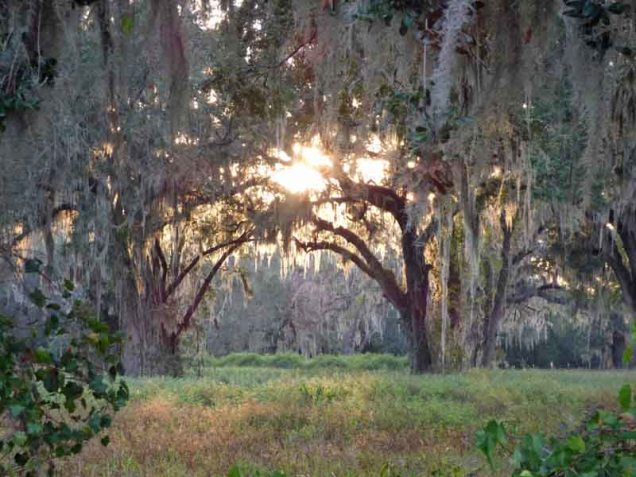 b4-sun-through-live-oaks-and-spanish-moss