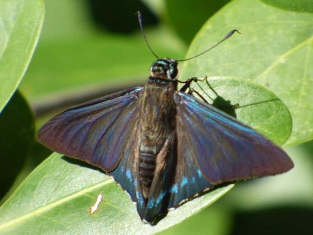 b-moth