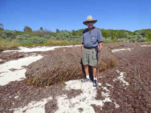 b-mound-of-sea-grass